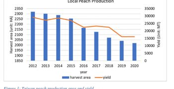 Taiwan's peach production on the rise