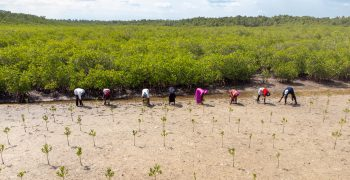 IFAD calls on world to act now on incomes