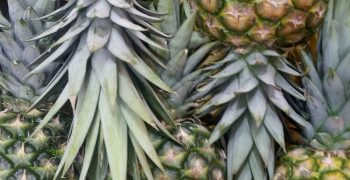 Dole and Ananas Anam to produce vegan leather from pineapple waste