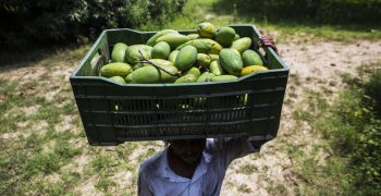 Amazon sets sights on securing India's fresh produce supplies