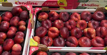EU stone fruit crop shrinks