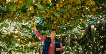Zespri to continue shipments as normal to China after Covid detection in fruit