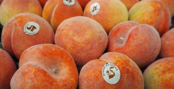 Global peach and nectarine production to climb slightly